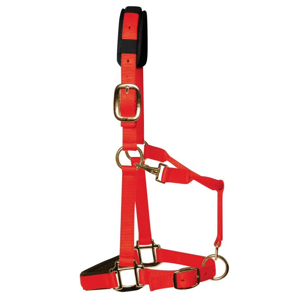 KM Elite Luxury Padded Headcollar Red